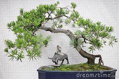 Chinese Zodiac, Bonsai, Pine, Trees, Miniatures, Landscape, Garden, Plants, Painting