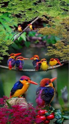 Photo of birds Cute Birds, Small Birds, Pretty Birds, Tropical Birds, Exotic Birds, Colorful Birds, Beautiful Creatures, Animals Beautiful, Cute Animals