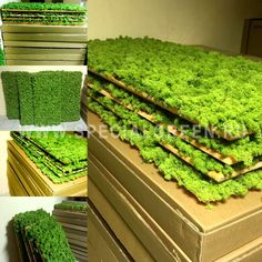 Готовая Панель из Мха ягеля для создания Зеленой стены, 125Х60 см, настенная