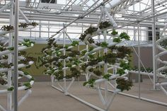 Hydroponic Garden, showing imaginative ways to grow crops -- without soil, hanging in the air, even on a space station. http://haveheartdaily.com