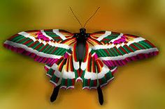Image result for most colorful butterfly in the world