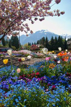 Flowers in Switzerland http://www.etips.com/ ♥ inhale, sigh..inhale, sigh...ahh, joy!! :) ♥