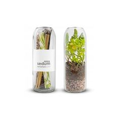 Sedum Indoor Terrarium (52 CAD) ❤ liked on Polyvore featuring home, home decor, floral decor, recycled bottles, modern home accessories, handmade home decor, succulent terrarium and modern home decor