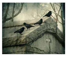 The Ravens photograph by gothicrow