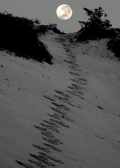 Stroll on the beach in the moonlight? or  Something scary is just beyond the dune
