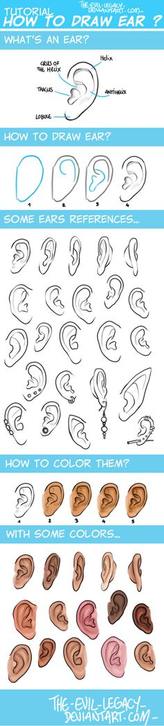 easy tutorial ideas for sketching ears