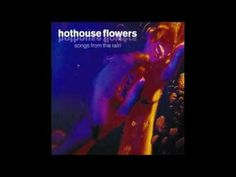 Thing of Beauty - Hothouse Flowers - their best!