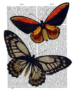 Hey, I found this really awesome Etsy listing at https://www.etsy.com/listing/177823361/butterfly-print-2-butterfly-illustration