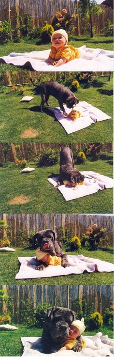 This was how my mom's great dane was w/ me as a baby ... and it will be how my (future) dog will act w/ my (future) babies!