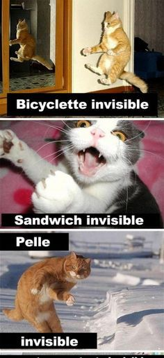 Quebec Meme + - Quebec Even the best photos, latest memes, half-hearted stuff - Cute animals - Funny Animal Pictures, Funny Photos, Cool Photos, Funny Images, Animals And Pets, Funny Animals, Cute Animals, Animals Photos, Funny Relatable Memes