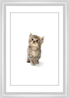 Kitten Framed Print, White, Classic, Black, White, Single piece, 20 x 30 inches