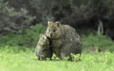 Funny mom and children from the animal world (19 photos)