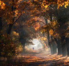 "500px / Photo ""Polish golden autumn"" by Przemyslaw Kruk (fproject)"