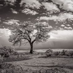 """The Last Tree"" (square) by Zero Dean Photography I love tree photography!"