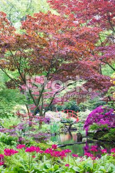 Colorful Japanese garden with rare plants and tree's. Rare Plants, Garden Photos, Fall Photos, Royalty Free Stock Photos, Japanese, Image, Color, Autumn Photos, Fall Season Pictures