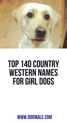 Top 140 Country Western Names For Girl Dogs Popular Female Dog Names, Western Names, Girl Dog Names, Dog List, Girl And Dog, Westerns, Country, Funny, Dogs