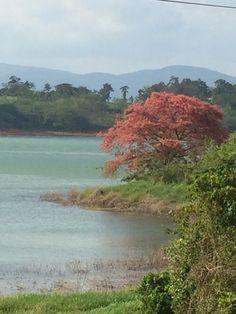 Lago Arenal.  Cercanías de Nueva Tronadora