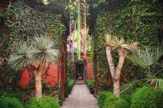 Colorful Ribbon, garden, courtyard, San Miguel de Allende, Gto., Mexico