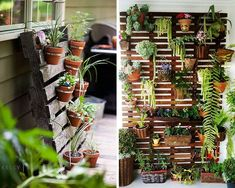 Blog, Gardens, Wall Trellis, Landscaping, Wish, Houses, Plants, Projects, Blogging