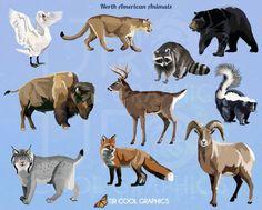North American Animals Digital Realistic Clip Art by CleverVectors