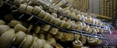 SANT'AGOSTINO DI FERRARA, Italy — Cheese producer Oriano Caretti woke up to the shaking earth, and then to the roar of some 30,000 39-kilogram  (86-pound) wheels of Parmesan cheese crashing to the ground in the warehouse next to his home. The 6.0-magnitude quake north of Bologna that killed seven people and toppled centuries old buildings also caused enormous d...