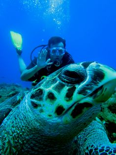 Many turtles today on San Clemente reef in Cozumel