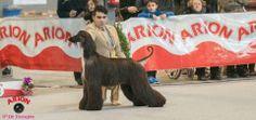 @Arion_ES #Exposición #Internacional #Canina en #Martorell. Allí estamos como patrocinadores principales!