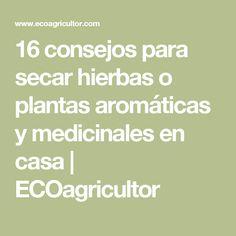 16 consejos para secar hierbas o plantas aromáticas y medicinales en casa | ECOagricultor