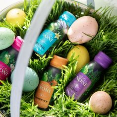 Easter is the only day it's a good idea to put all your eggs in one basket. Egg-specially if they include Tahitian Noni Wellness Shots. 🐣 #HappyEaster Tahitian Noni, Wellness Shots, Happy Easter, Eggs, Basket, Personal Care, Good Things, Happy Easter Day, Self Care