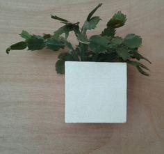Wall planters Q16vasesplant potsliving wallgreen by Spazio7