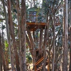 Check out this Hipcamp in California: Treehouse Magic Grove, Magical, Romantic Treehouse - In a lovely eucalyptus grove, nestled securely 30  feet up in multi-trunked 110 ft. tree.  Deck, artisticly appointed cabin, cozy queen bed, luxury...