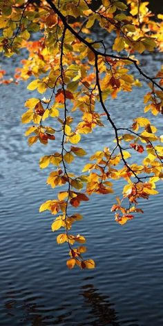 Ideas Wall Paper Fall In Love Autumn Leaves Fall Pictures, Nature Pictures, Beautiful Pictures, Autumn Scenes, Autumn Leaves, Golden Leaves, Autumn Fall, Beautiful World, Mother Nature