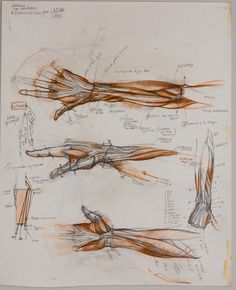 Master artist Sabin Howard offers webinars and workshops in drawing and design. Arm Anatomy, Anatomy Drawing, Anatomy Art, Human Anatomy, Gross Anatomy, Anatomy Study, Body Reference Drawing, Anatomy Reference, Art Reference