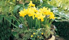 How to layer bulbs in a pot - Projects: Seeds and bulbs - gardenersworld.com
