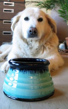 Pottery spaniel dog bowl by rikablue on Etsy, $25.00