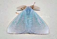 Pretty little blue moth.