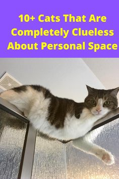 Any cat person reading this doesn't really need to be told this. Cats are clingy, cats are independent, and they also don't get what personal space is. Cats are practically liquid, and you can bet they'll make themselves fit into any spot that they want.
