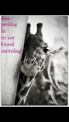 Good Morning Rainy Day, Good Morning Friends, Good Morning Good Night, Good Morning Funny Pictures, Good Morning Images, Good Morning Quotes, Great Day Quotes, Daily Quotes, Giraffe Quotes
