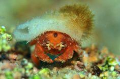 DOGA REHBERI Deniz Canlilari  https://play.google.com/store/apps/details?id=itech.event  Doğa Rehberi (Deniz Canlıları) 2011 yılında basılan Türkiye Deniz Canlıları Rehberi'nin genişletilmiş bir düzenlemesidir. Önceki çalışmada yer verilemeyen türlere yeni ulaşılan canlılar ilave edilerek 280 tur olan deniz canlısı sayısı 500'e yükseltilmiş olup her geçen gün yapılan yeni güncellemeler ile birlikte yeni canlılar keşfedilmekte ve bu sayı artmaktadır.