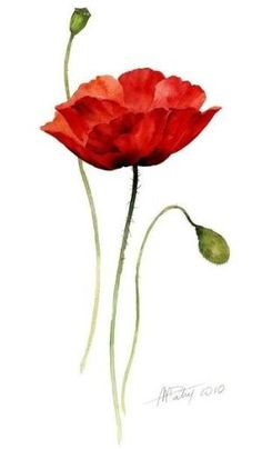 watercolor poppy tattoo - Google Search by lesa