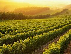 A vineyard to die for!