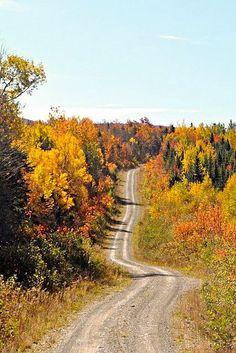 Old logging road (Maine)
