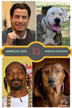 It makes you wonder if these animals are actually related to the celebrities. Some of these are just too good to be true!
