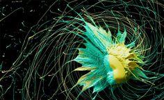 Desafio Criativo - Sua dose diária de inspiração e criatividade!: Tecnologia, Criatividade e Física a Favor da Arte