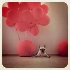 the perfect dog pix