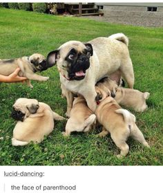 Pugs on pugs on pugs on pugs on pugs. WE LOVE PUGS. In this awesome dog compilation by petsami check out some of our favorite pug moments from the petsami vault Funny Animal Pictures, Cute Funny Animals, Funny Cute, Funny Dogs, Cute Dogs, Hilarious, Dog Pictures, Funny Photos, Funniest Pictures