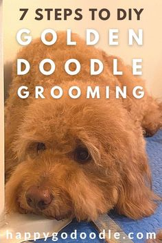 So you've been thinking about grooming your Goldendoodle at home? It's totally do-able! Here are 7 DIY Goldendoodle grooming tips to get you started off on the right paw. You've got this! #diygoldendoodlegrooming #goldendoodlegroomingathome Goldendoodle Haircuts, Goldendoodle Grooming, Dog Grooming, You Doodle, Doodle Dog, Kong Toys, Puppy Cut, Doggy Stuff