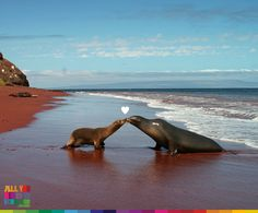 Love doesn't have limits and they know it very well #AllYouNeedisEcuador, #Ecuador is all you need...