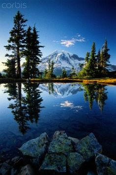 Mount Rainier National Park - Washington (i still remember the car ride up and the fresh scent 👍) Places To Travel, Places To See, Beautiful World, Beautiful Places, Landscape Photography, Nature Photography, Mount Rainier National Park, Photos Voyages, Belle Photo