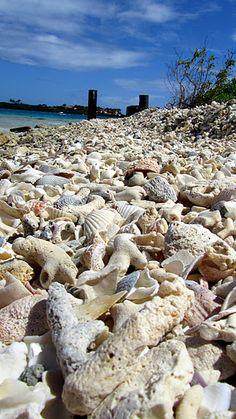 Beach in Antigua...Maiden's Island. Starfish and shells- EVERYWHERE